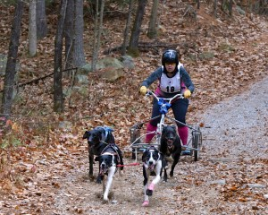 4-dog team running Auburn trail